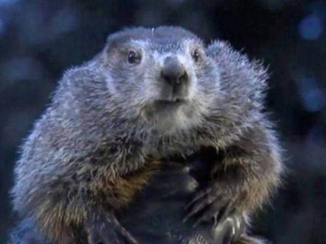 Watch Punxsutawney Phil Declare Six More Weeks of Winter on Groundhog Day