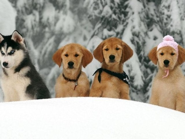 How to Keep Your Pet Safe in Sleet, Snow, Ice and Freezing Temperatures