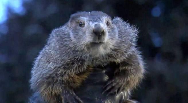 groundhog-day-punxsutawney-phil-abc