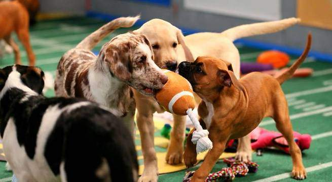 puppy-bowl-discovery-channel