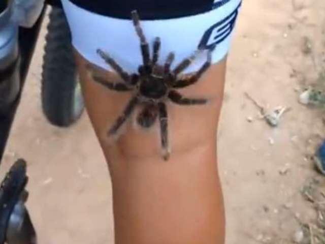 Watch Tarantula Hitch a Ride on Back of Cyclist