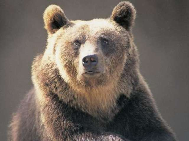 Man Dies Trying to Take Selfie With Bear