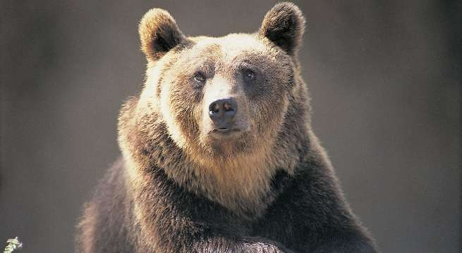 bear selfie getty