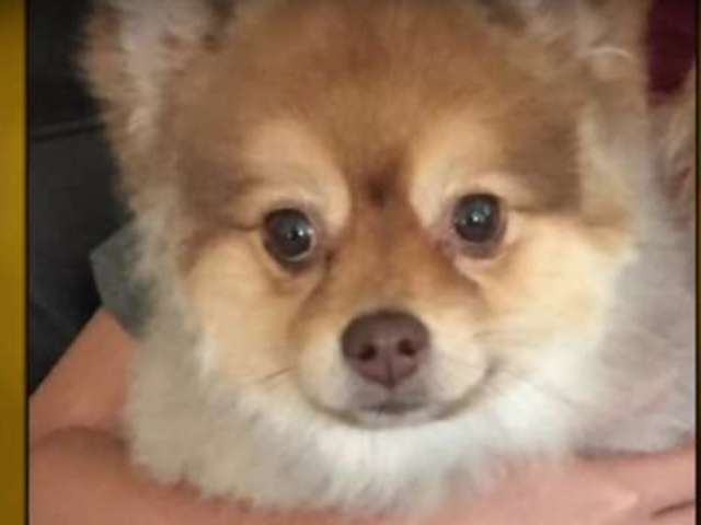 Dog Dies While on Delta Airlines Flight