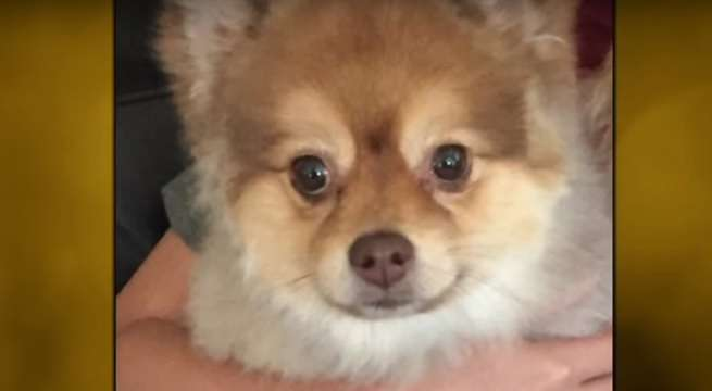 alejandro dead dog