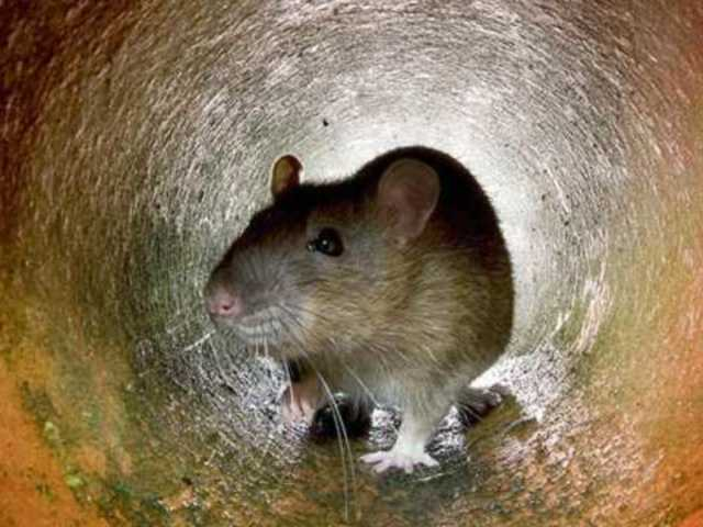 Hungry Rat Eats More Than $17,000 in Cash Inside of ATM