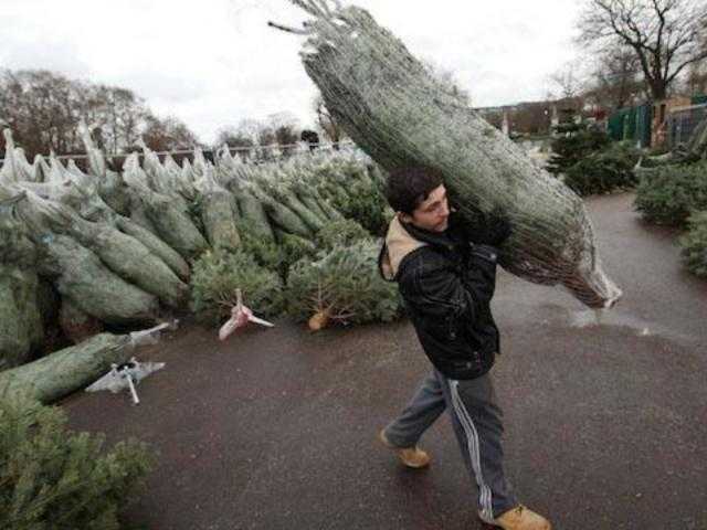 Amazon to Sell and Ship Live Christmas Trees