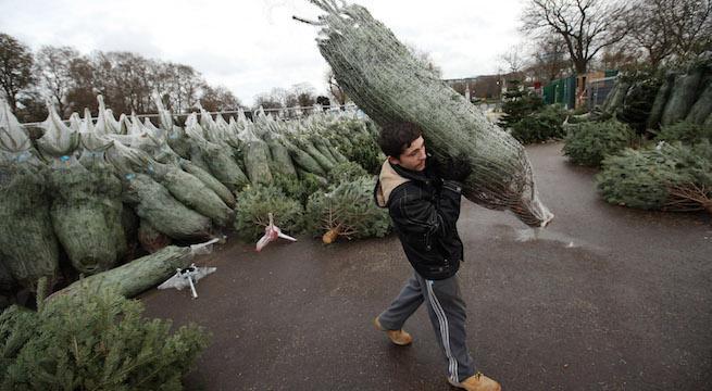 christmas-tree_getty-Oli Scarff : Staff
