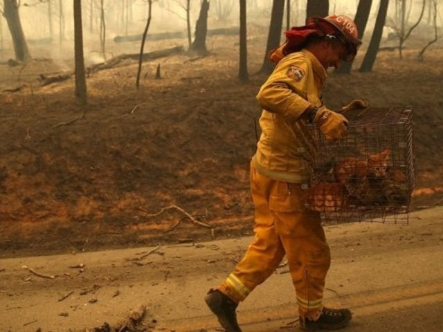 California Wildfires Show Significant Devastation Rampaging Across State
