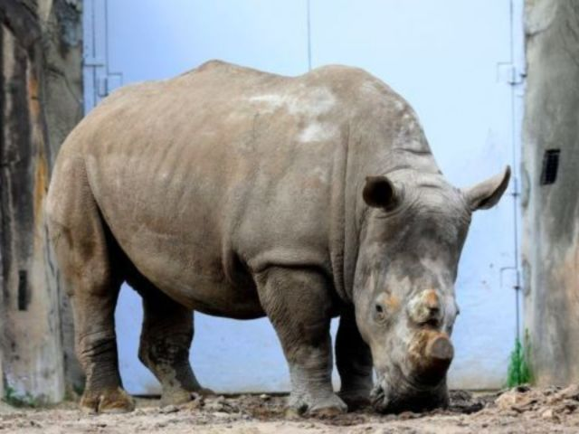 Child Rushed to Hospital After Falling Into Florida Rhino Exhibit