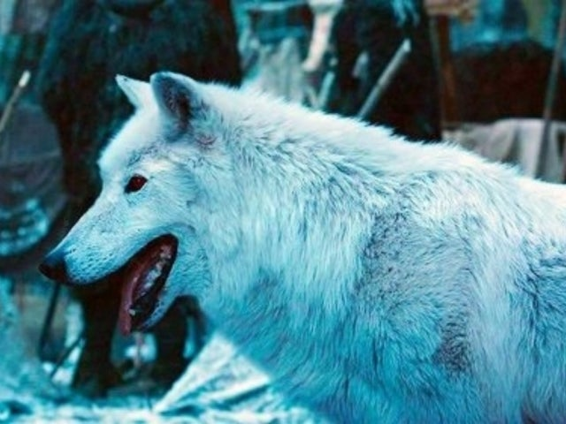 'Game of Thrones' Director Reveals Real Reason Why Jon Snow Didn't Give Ghost a Proper Goodbye