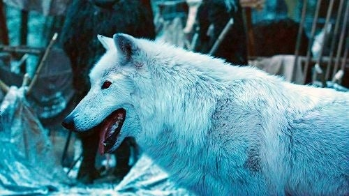 Ghost-game-of-thrones-direwolves-hbo