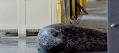 Animal Planet's 'The Aquarium' Helps Nervous Seal Named Floyd to Use the Elevator in Exclusive Sneak Peek
