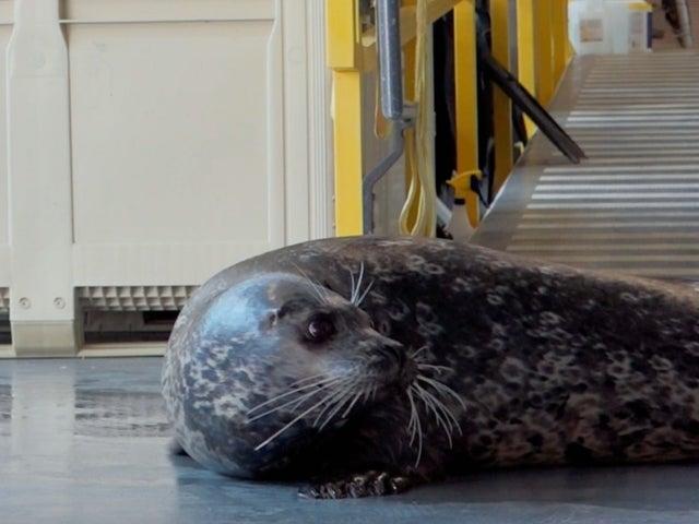 Animal Planet's 'The Aquarium' Helps Nervous Seal Named Floyd to Use the Elevator in Exclusive Sneak Peek