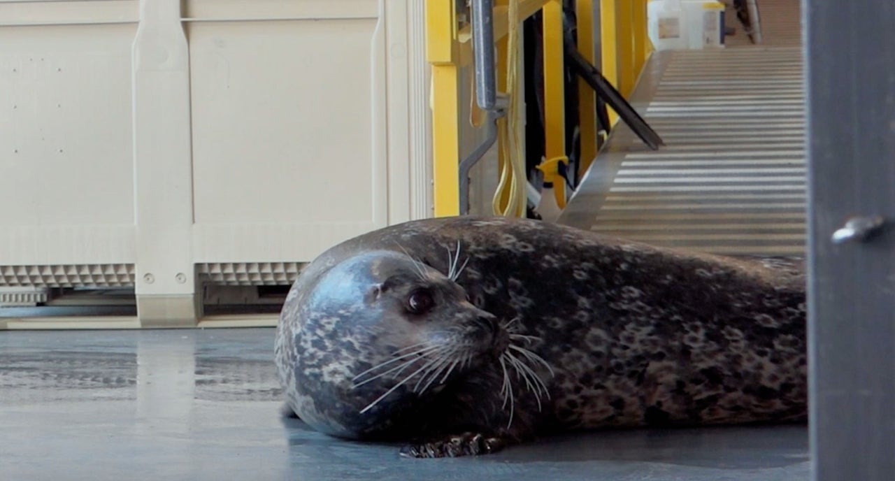 The Aquarium Floyd the Seal