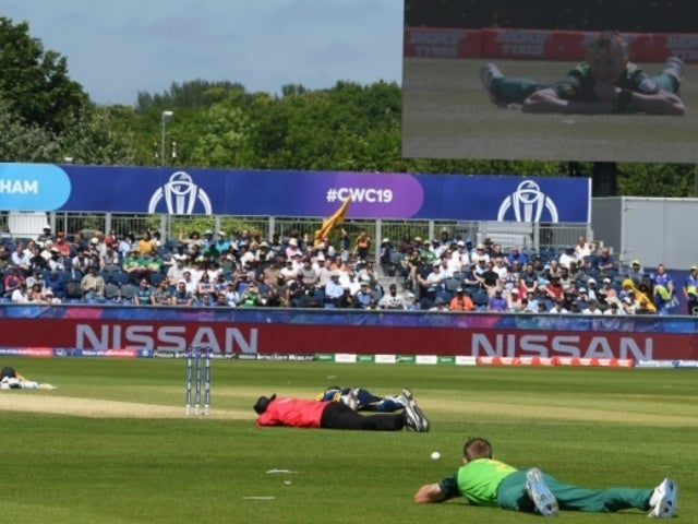Swarm of Bees Blanket Cricket World Cup, Match Gets Delayed