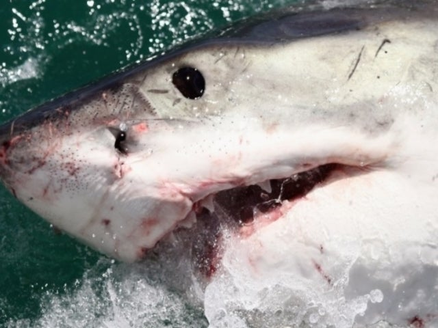 Shark Week 2019: What Experts Are Worried About