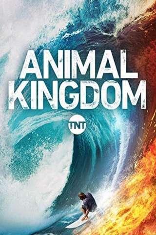 animal_kingdom_default