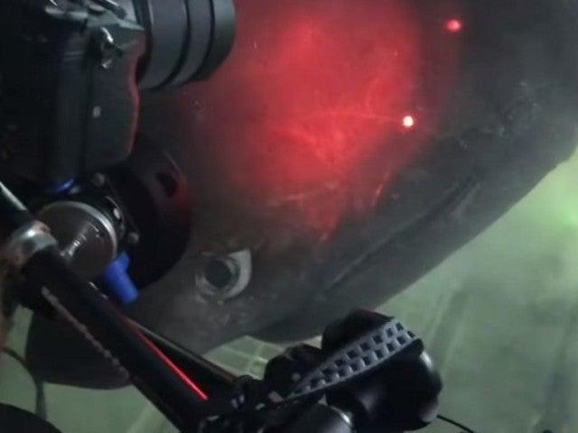 Massive 20-Foot Deep Sea Bluntnose Shark Has Close Encounter With Submarine