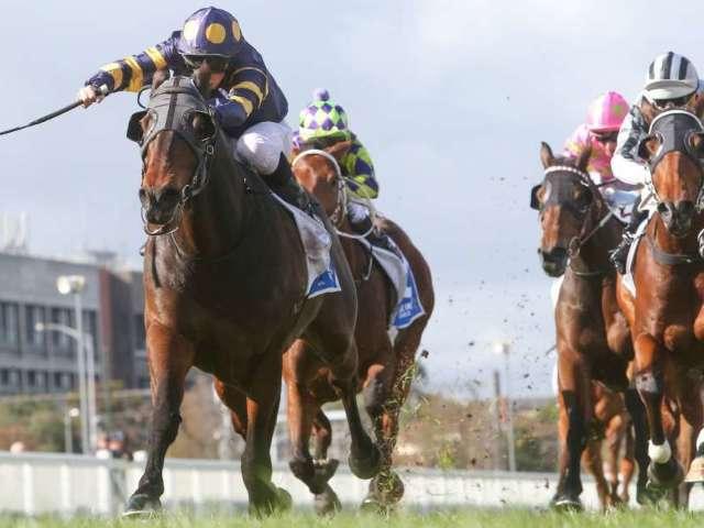 Saudi Arabia to Host $20 Million Horse Race, Richest in the World