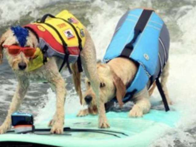 World Dog Surfing Championships Ban Small Dog Winner Because of Owner
