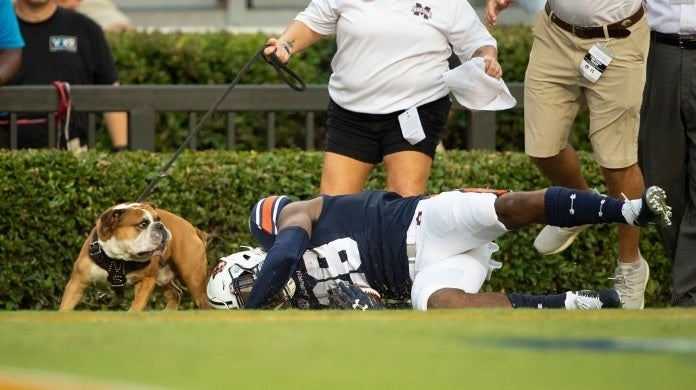 mississippi state bulldog getty images