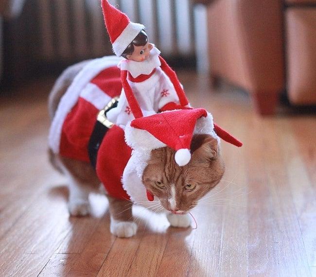 cat-elf