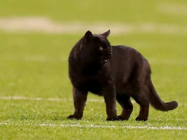 Dallas Cowboys 'Honor' Black Cat During 'Sunday Night Football'