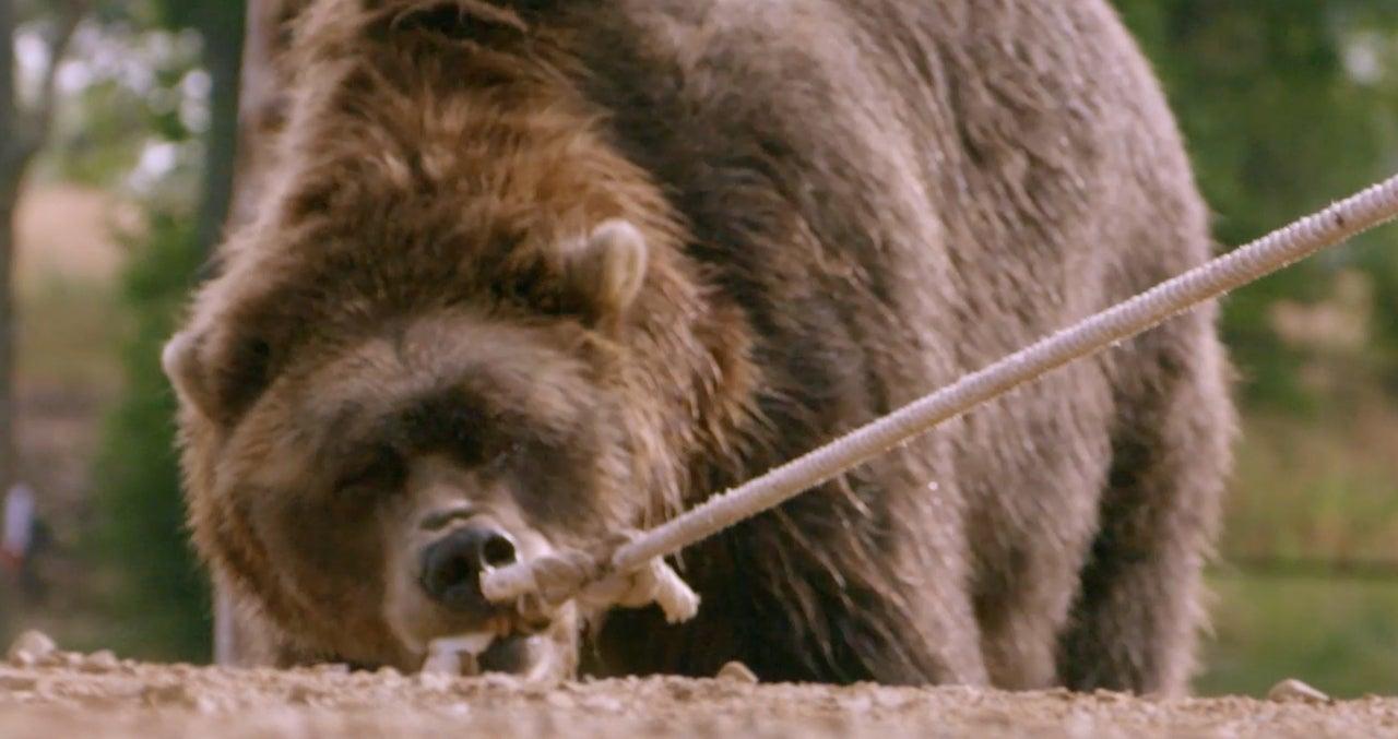Man Vs Bear
