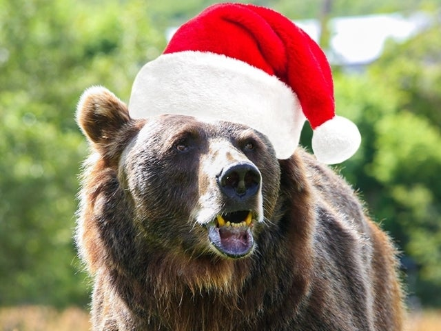 Discovery Wishes Fans 'Bear-y Christmas' With 'Man vs. Bear' Marathon (Exclusive)