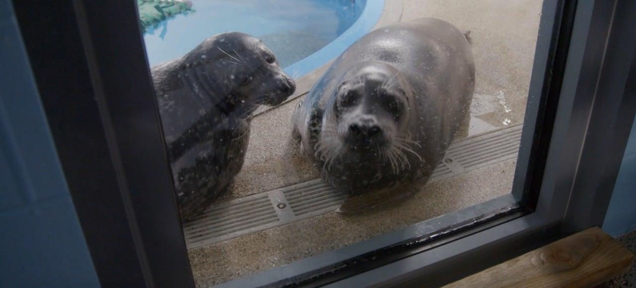 Floyd the Seal