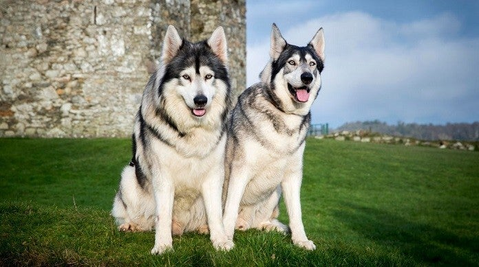 odin-thor-direwolf-game-of-thrones-getty