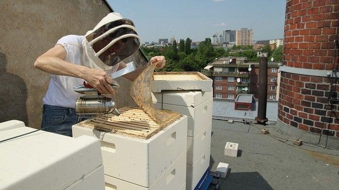beekeeper-getty