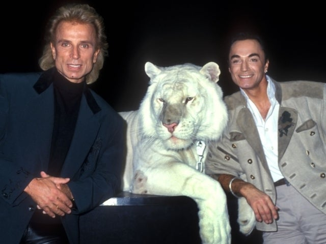Roy Horn Dead: Look Back on 2003 Tiger Attack That Nearly Ended Siegfried and Roy Magician's Life