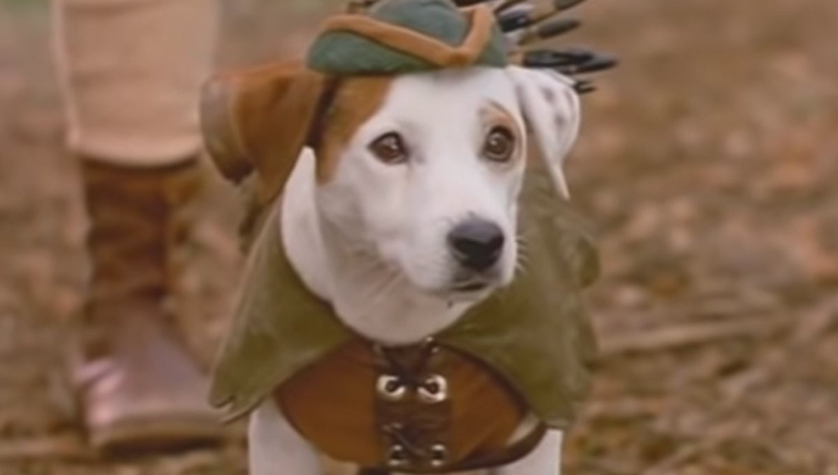 wishbone-movie