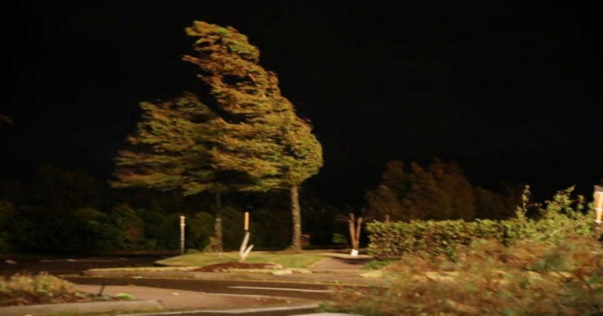 hurricane-laura-trees-getty