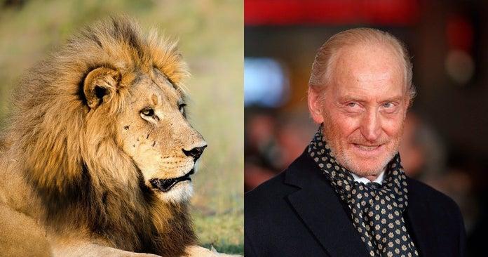 savage-kingdom-lion-charles-dance-natgeo-getty