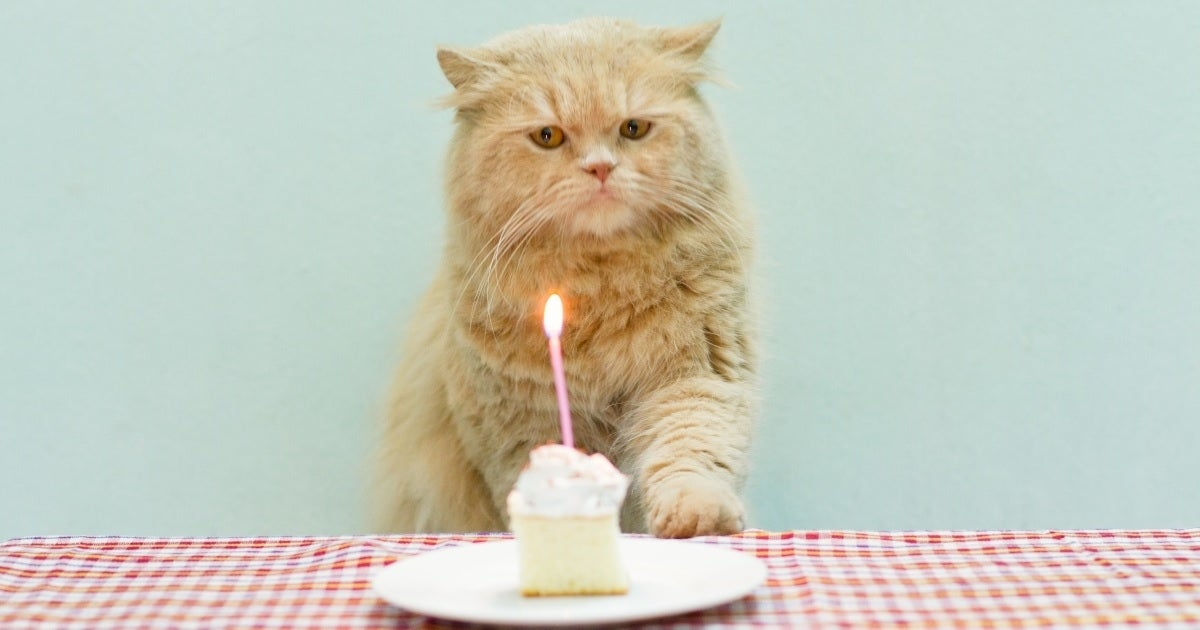 cat birthday getty images