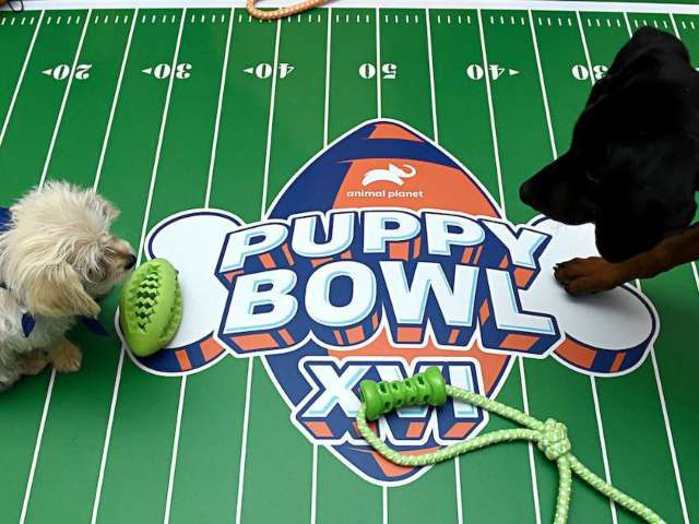 Puppy Bowl Bringing 70 Pups Onto the Gridiron for 2021 Event