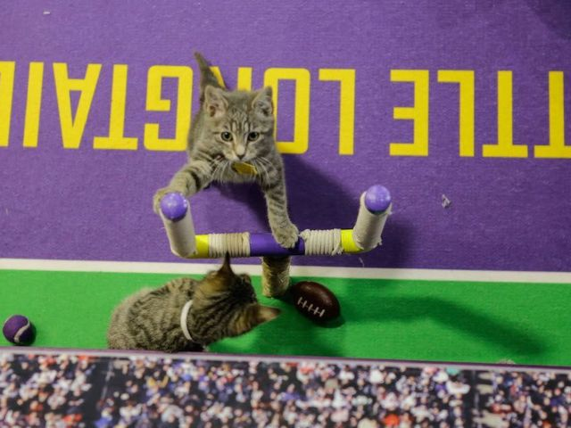 Kitten Bowl 2021: Time, Channel and How to Watch