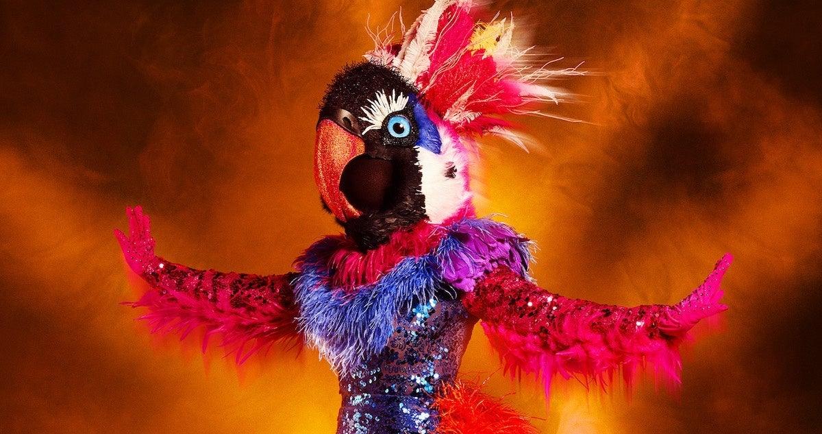 masked-dancer-fox-exotic-bird