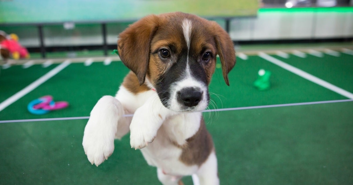 puppy bowl getty images
