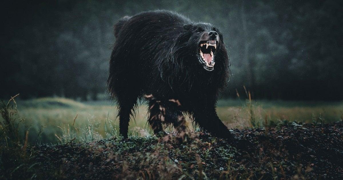 angry-dog-getty