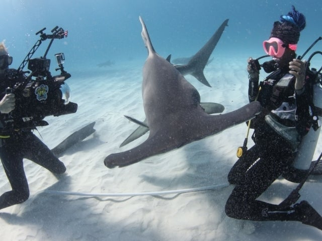 SharkFest 2021: A Guide to All the Must-See Specials