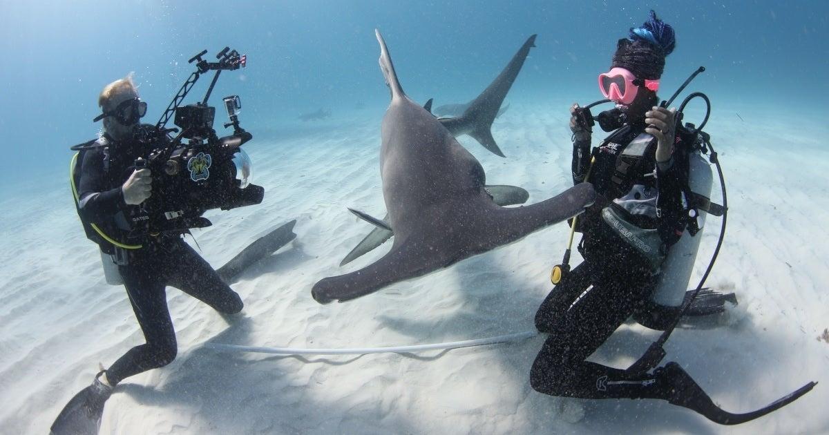 man vs shark natgeo