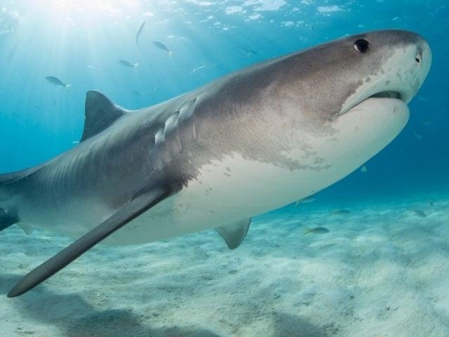 Drunk Man Killed in Shark Attack While Using Ocean as Bathroom