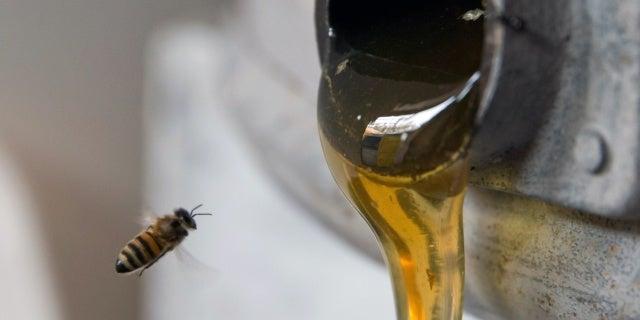 honey-tiktok-trend